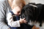 Scotch Collies make wonderful family dogs